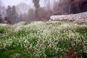حديقة بيت إيلانى فى قريتها الجبلية